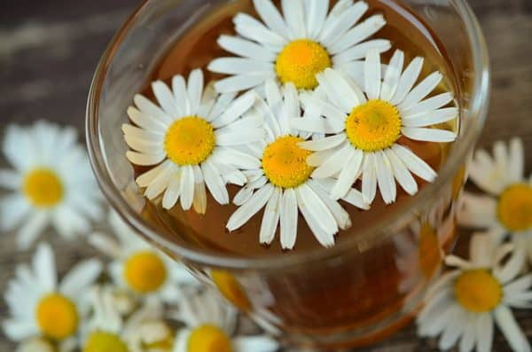 Chamomile Tea Health Benefits - Sleep, Immunity, and More!