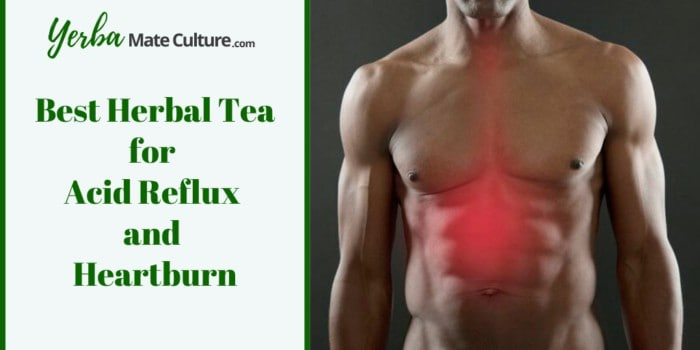 Best Herbal Tea for Acid Reflux and Heartburn
