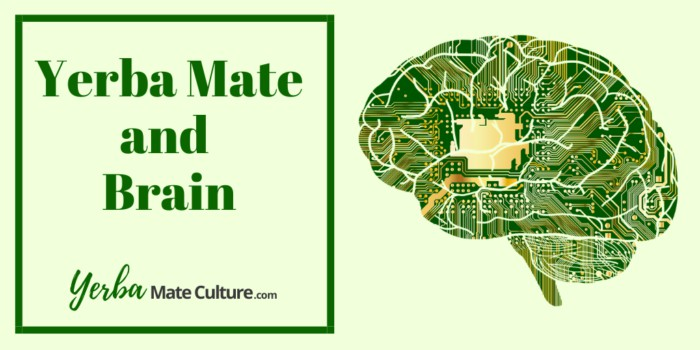 Yerba Mate and Brain: Mental Focus and Energy + Protection!